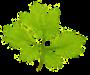 Société Mycologique et Botanique du Chablais